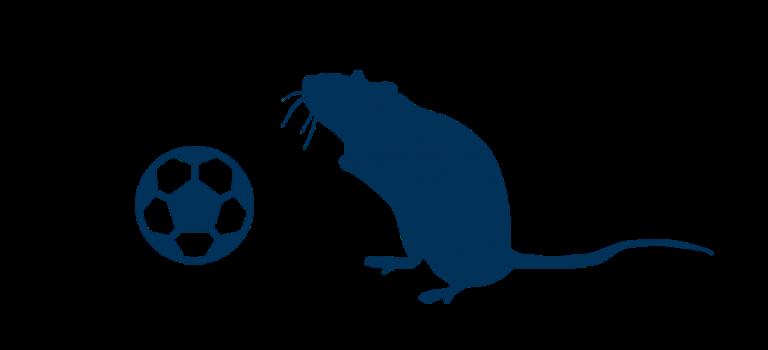 Verhungernde Ratten & Wettbewerb im Fußball